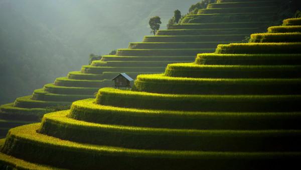 General 3840x2160 landscape field plants Agro (Plants) rice fields